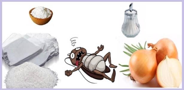 Remedio casero para eliminar las cucarachas para siempre - Como terminar con las hormigas en casa ...