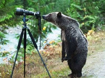 Videos Chistosos De Animales 6 Oso Fotógrafo Beliefnet