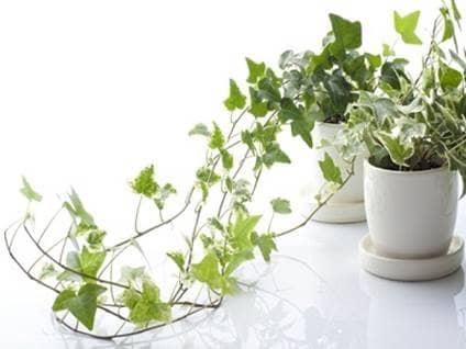Plantas de interior que te ayudaran a purificar el aire de for Plantas decorativas para el hogar