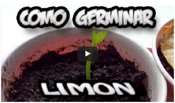 Como sembrar una planta de limon 2 beliefnet Como cultivar peces en casa