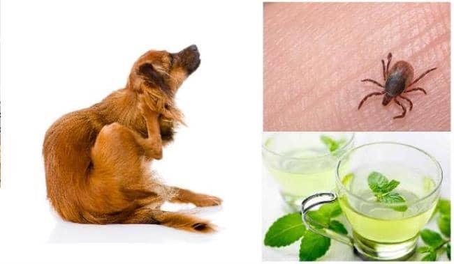 Este remedio casero hace que las pulgas salgan beliefnet - Casa de las pulgas ...