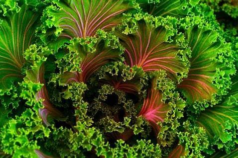 imagen de alimentos organicos