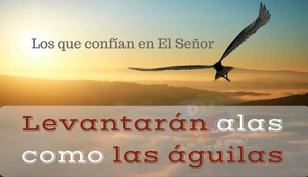 Sal A Volar Tu Eres Un águila De Dios Beliefnet