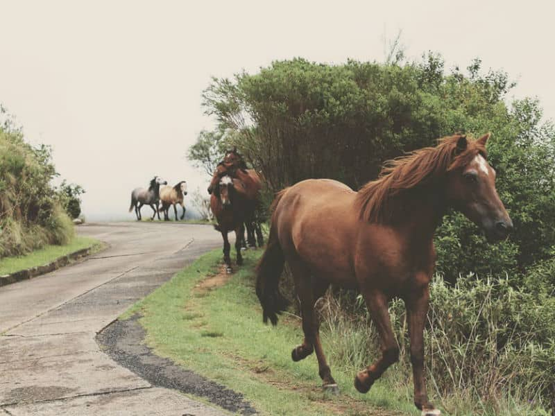 Group of Horses on Road
