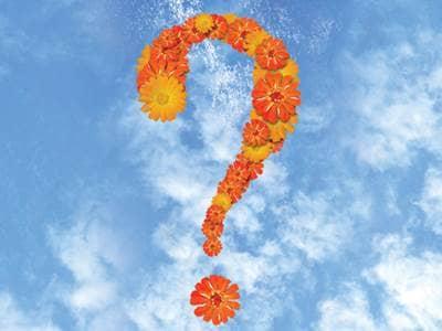 Top 10 Most Popular Features on Beliefnet - Belief-O-Matic™ Quiz