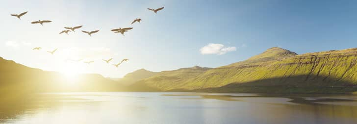 migrating birds over lake