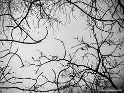 depression-trees-sky-grey