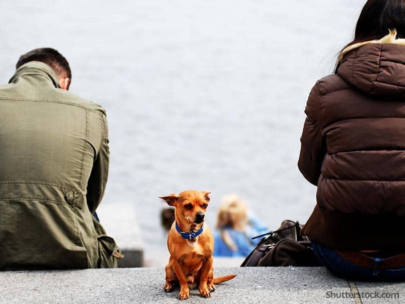 animal couple fighting dog separation
