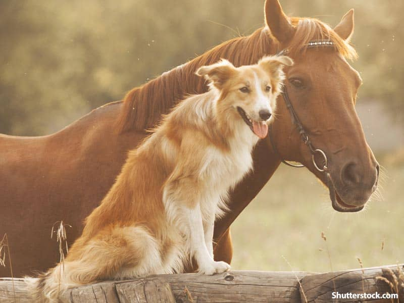 animals horse dog