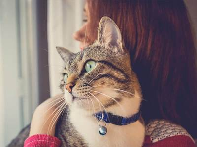 7 Prayers and Blessings For Animals | What is the Feast Say