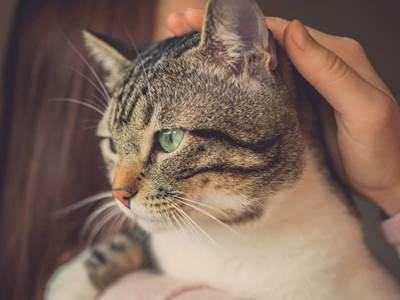 5 Ways Our Departed Pets Communicate With Us - Beliefnet