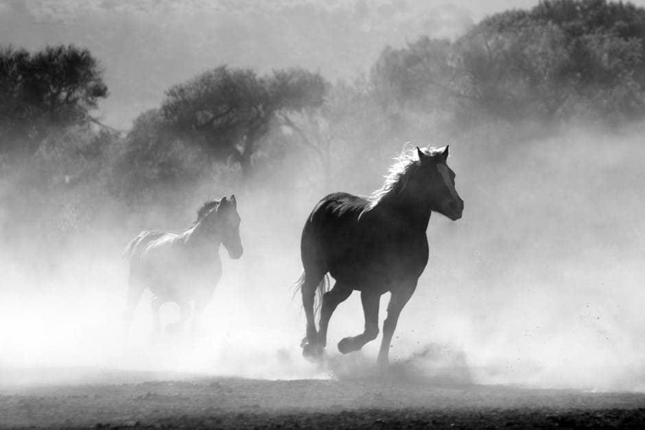 Horses in Fog