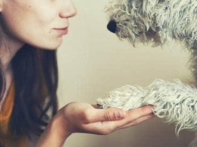 Dog with human