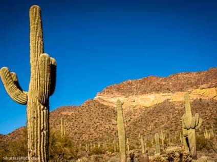 crazy, laws, cactus