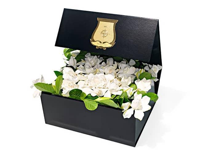 Box of Bloom