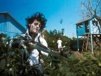 Edward Cutting Trees