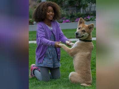 Annie and dog sitting