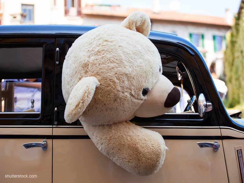 bear car uncaged