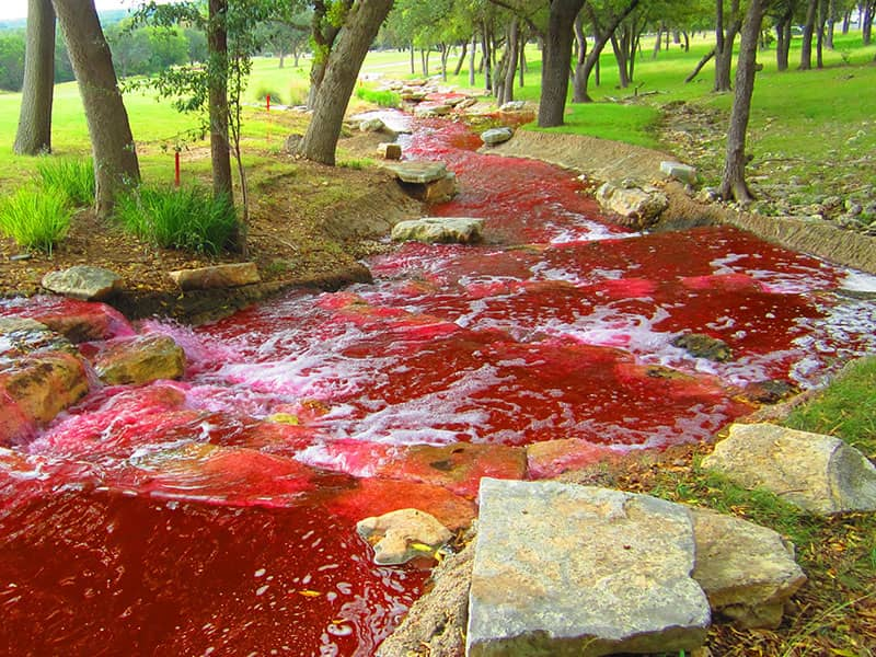4 Signs the 10 Plagues Are Reappearing - Beliefnet
