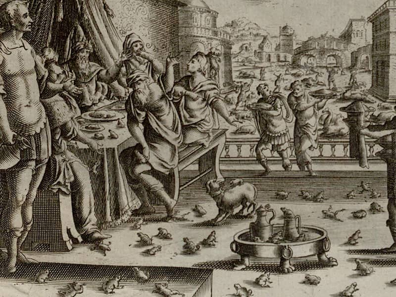 Plague of Frogs Exodus
