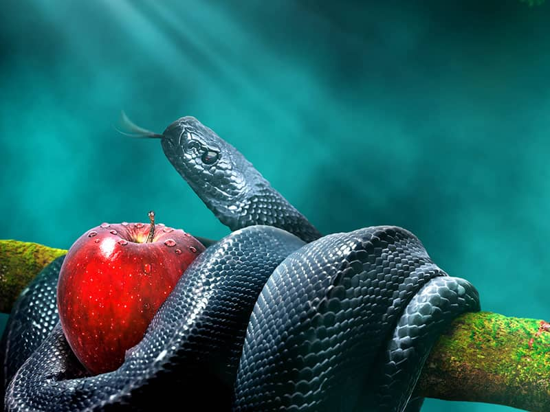 Eve serpent apple