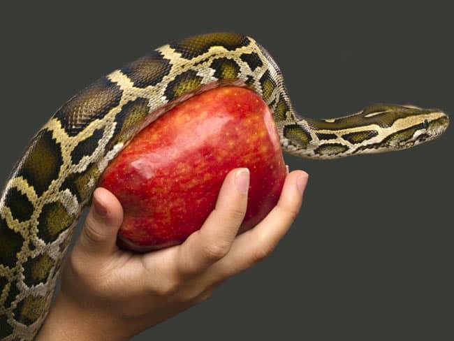 Apple, snake