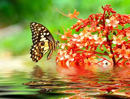 butterfly on red flower in water