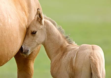 baby and mom love