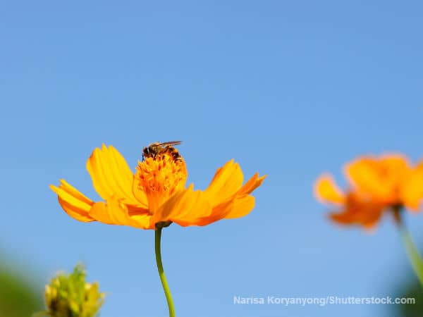 Bee resting on a flower