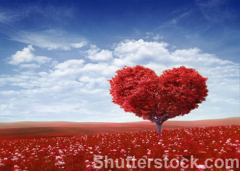 God and the heart, why God looks at the heart, heart Bible verses