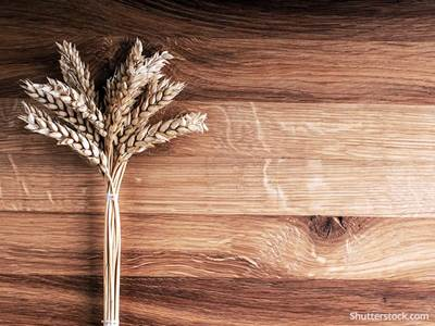 food-harvest-fall-wheat