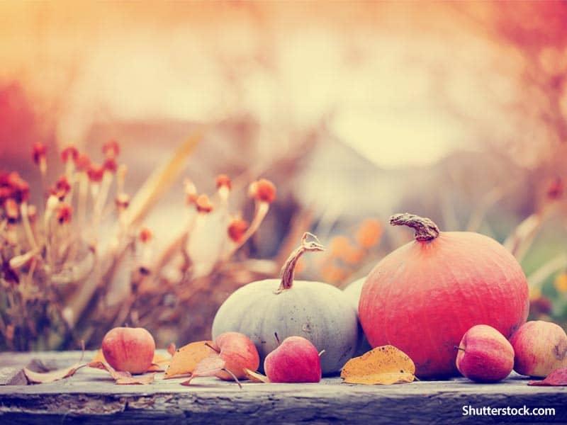 Nature Pumpkins