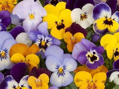 Shutterstock.com. Landscape with flowers