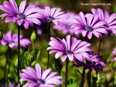 6 Ways To Thank God For His Creation by Jana Duckett | God ...
