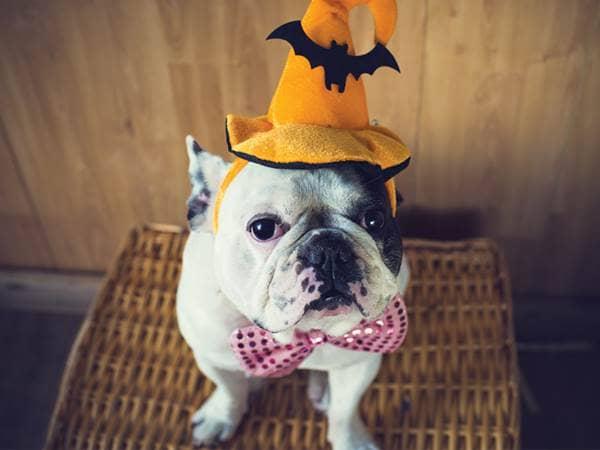 dog witch