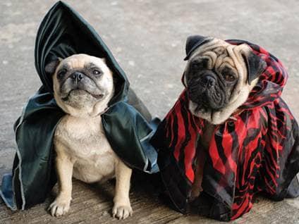 pugs wizard