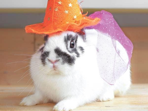 rabbit witch