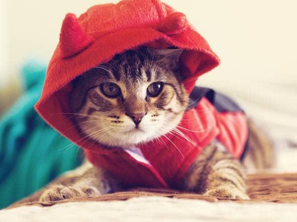 devin kitten