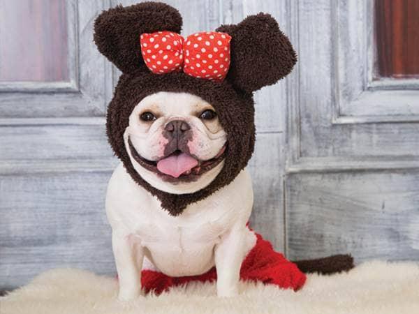 dog mouse