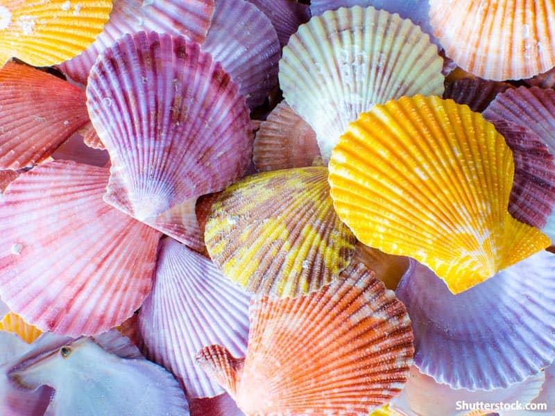 colors shells