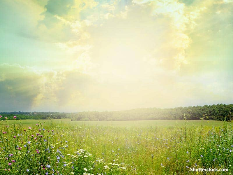 nature open field sunbeams