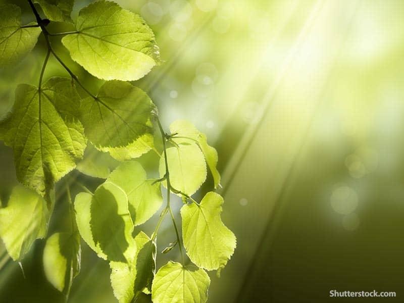 nature plant sunlight