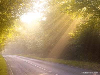 nature woods road