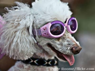 bizarre, inventions, doggles