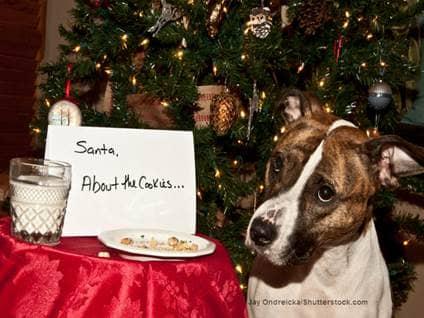 Dog ate cookies