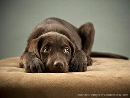 Scared Dog