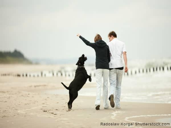 beach dog couple