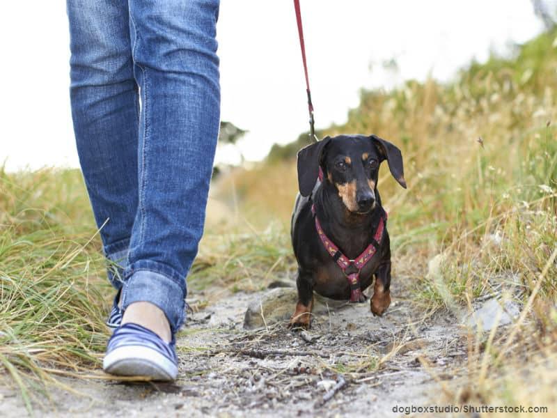 doggy walking