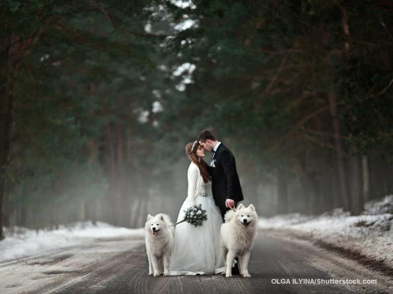 Bride and Groom Dogs Winter Wedding