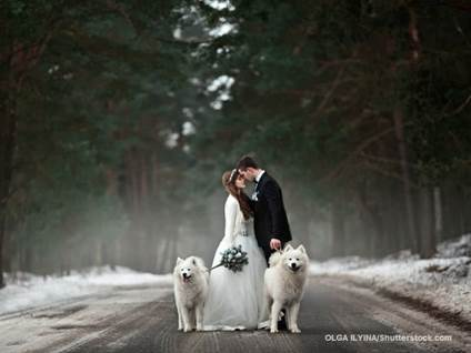 Bride and Groom Dogs Winter Wedding